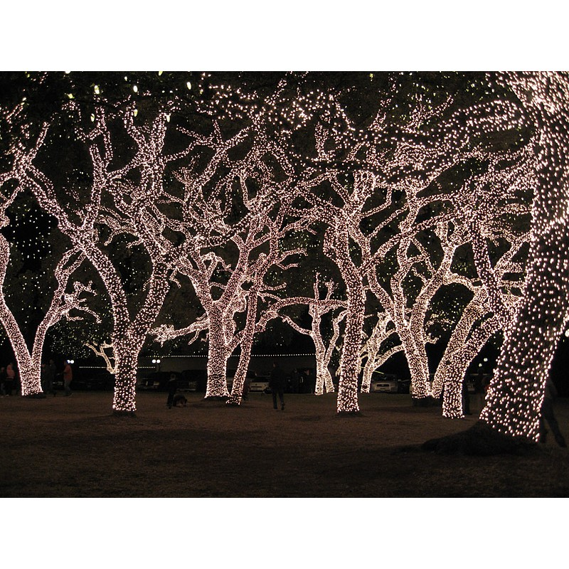 Fairy Lights - Cool White 17.5m